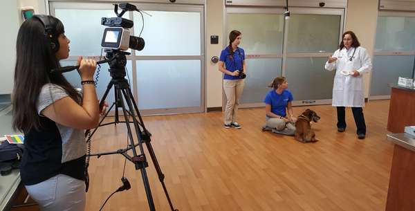 Veterinary Forensic Sciences Distance Education